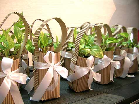 Sapling as Eco-Friendly Return Gifts